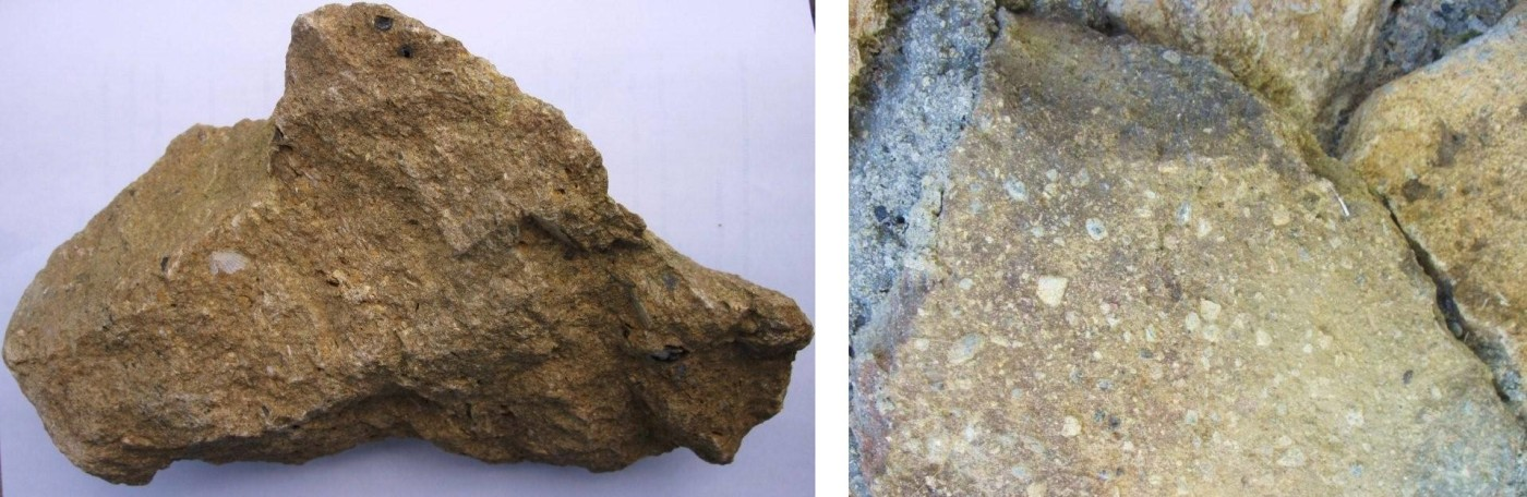 Fig. 12 - Campioni di Calcari di Volterra raccolti presso la vecchia cava di Montebradoni
